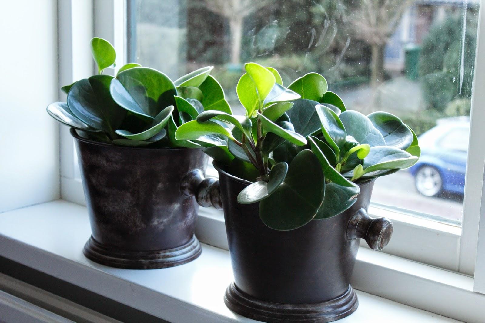 Lila Ledikant: Groen in huis