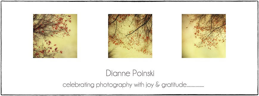 Dianne Poinski Photography