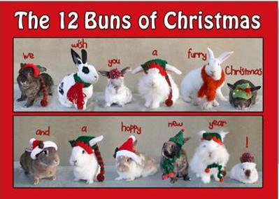 for christmas because its not too late examples are below but there are lots more choices at the website so if you like bunny cards check it out - Humane Society Christmas Cards