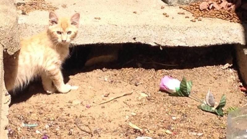 Evitemos que más gatos sean emparedados vivos