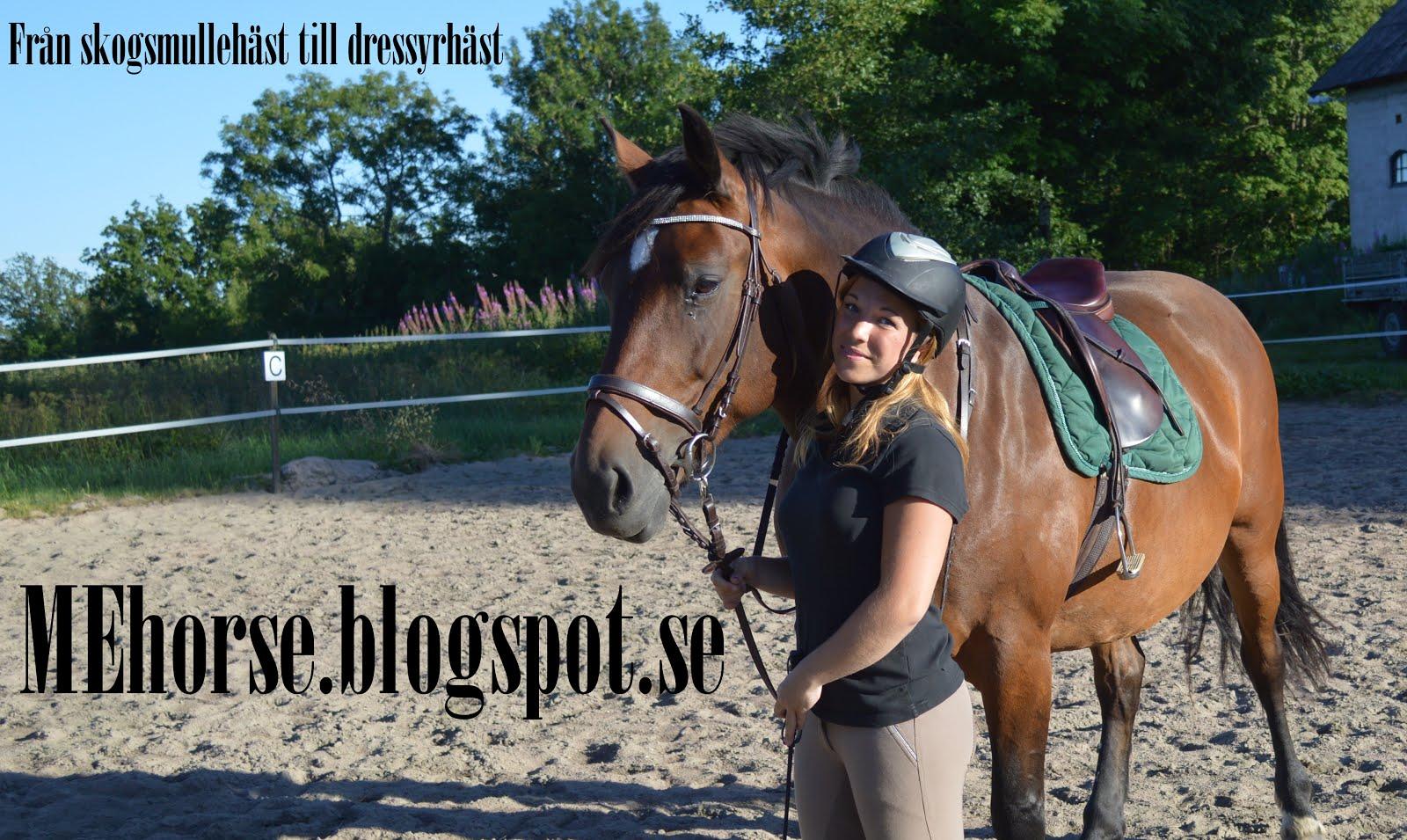 Från skogsmullehäst till dressyrhäst