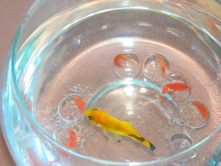 My Fish.