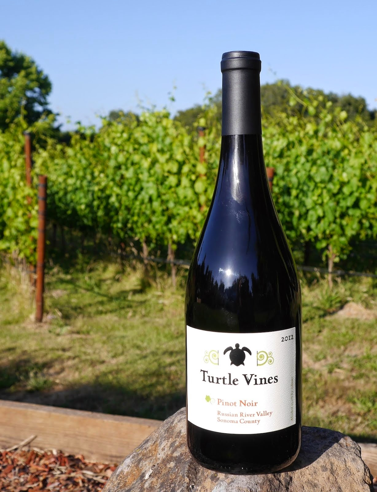 delicious vegan pinot noir from Turtle Vines