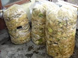obat fermentasi soc