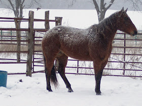 Our Horses - American Quarter Horse