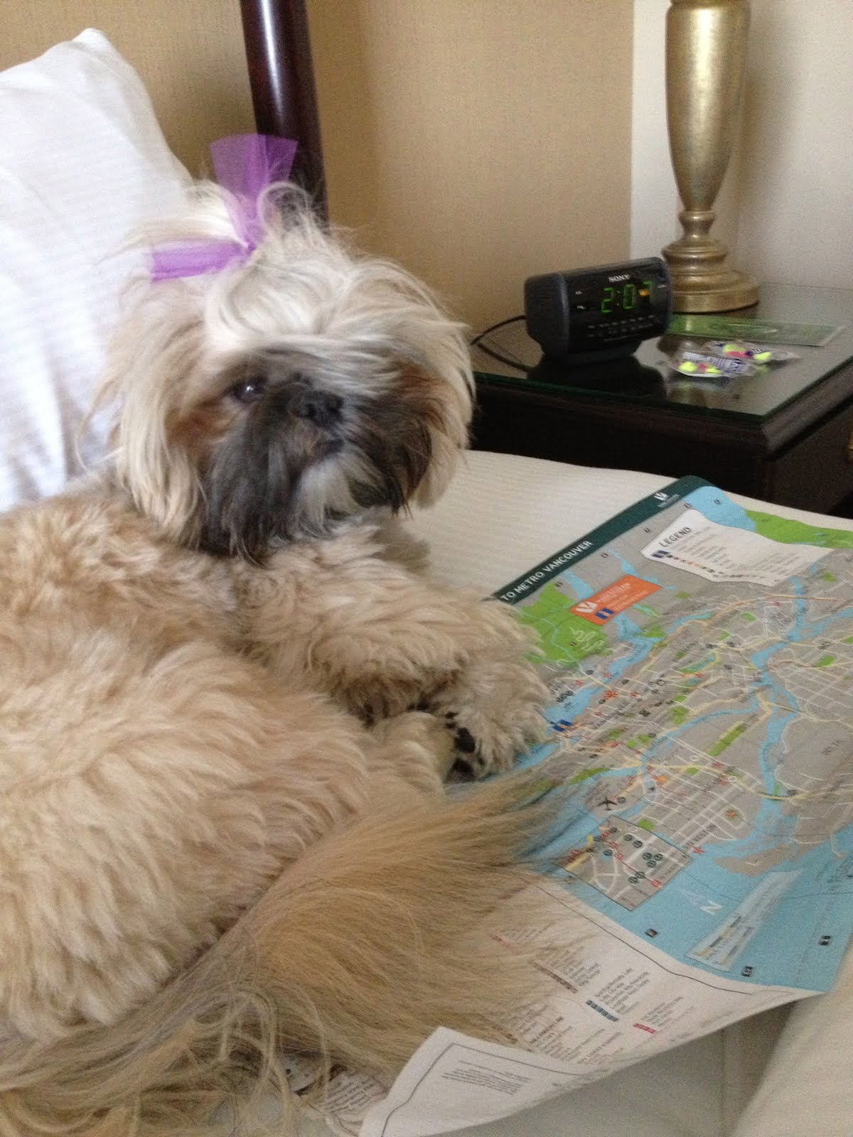 Xingxing the Globe-Trotting Service Dog