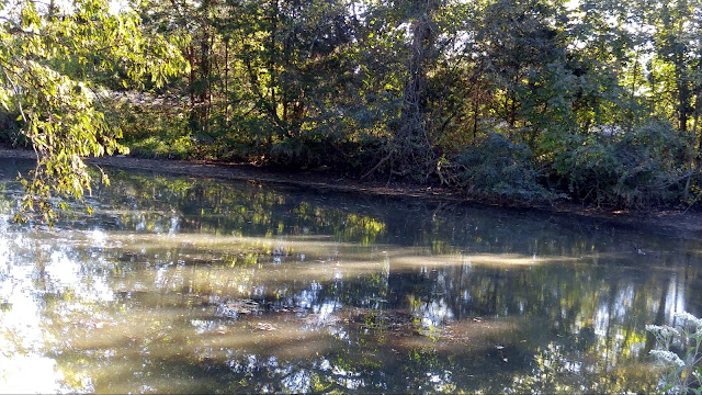 My WAHM Plan: sunlight reflections on our pond #WW