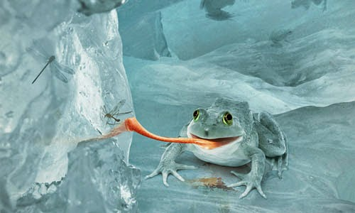 http://psd.tutsplus.com/tutorials/photo-effects-tutorials/snow-frog/