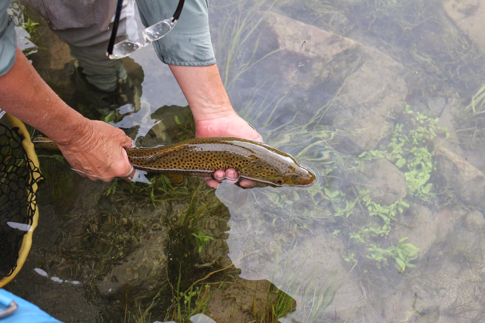 Part 2 cicada hatch green river flyfishing jay for Hatch fly fishing