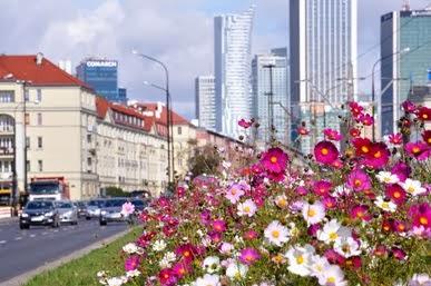 Warszawianki w Warszawie