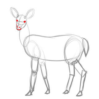 how to draw deer - step 6