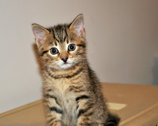 kitten looking cute
