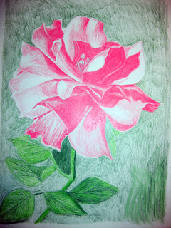 Third photo of Work in Progress - Color Pencil Drawing of a Pink Rose