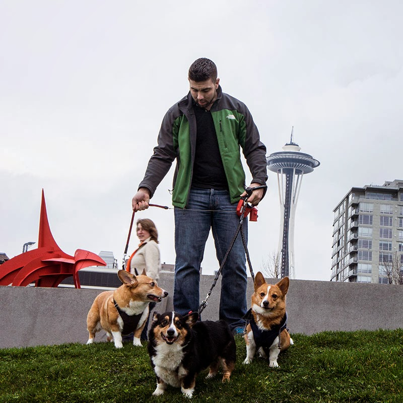 Corgis and space needle