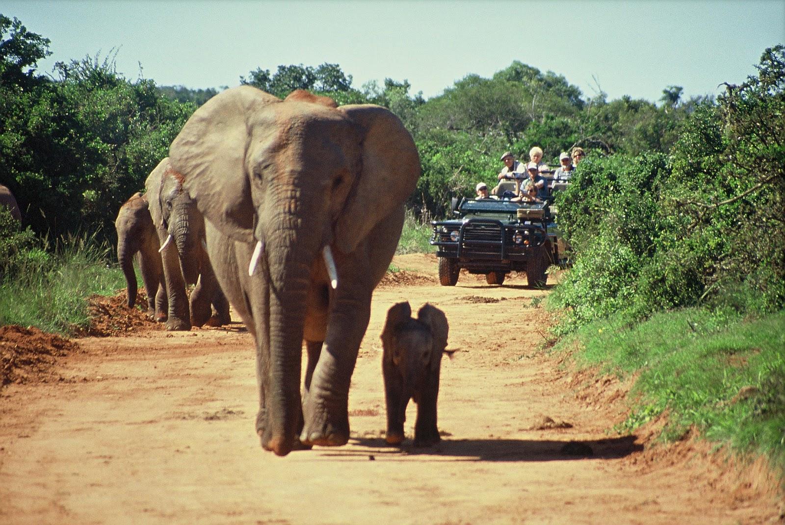 La experiencia de un safari africano