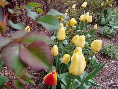 Dise os variados para tu jardin patios y jardines for Ideas para arreglar tu jardin