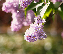 'Lilac in the sun' by**Aina** on Flickr