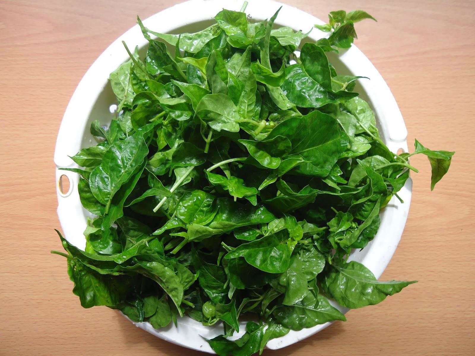 Chili leaves or dahon ng sili
