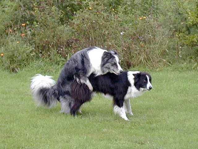 Dogs Mating With Dogs | just b.CAUSE