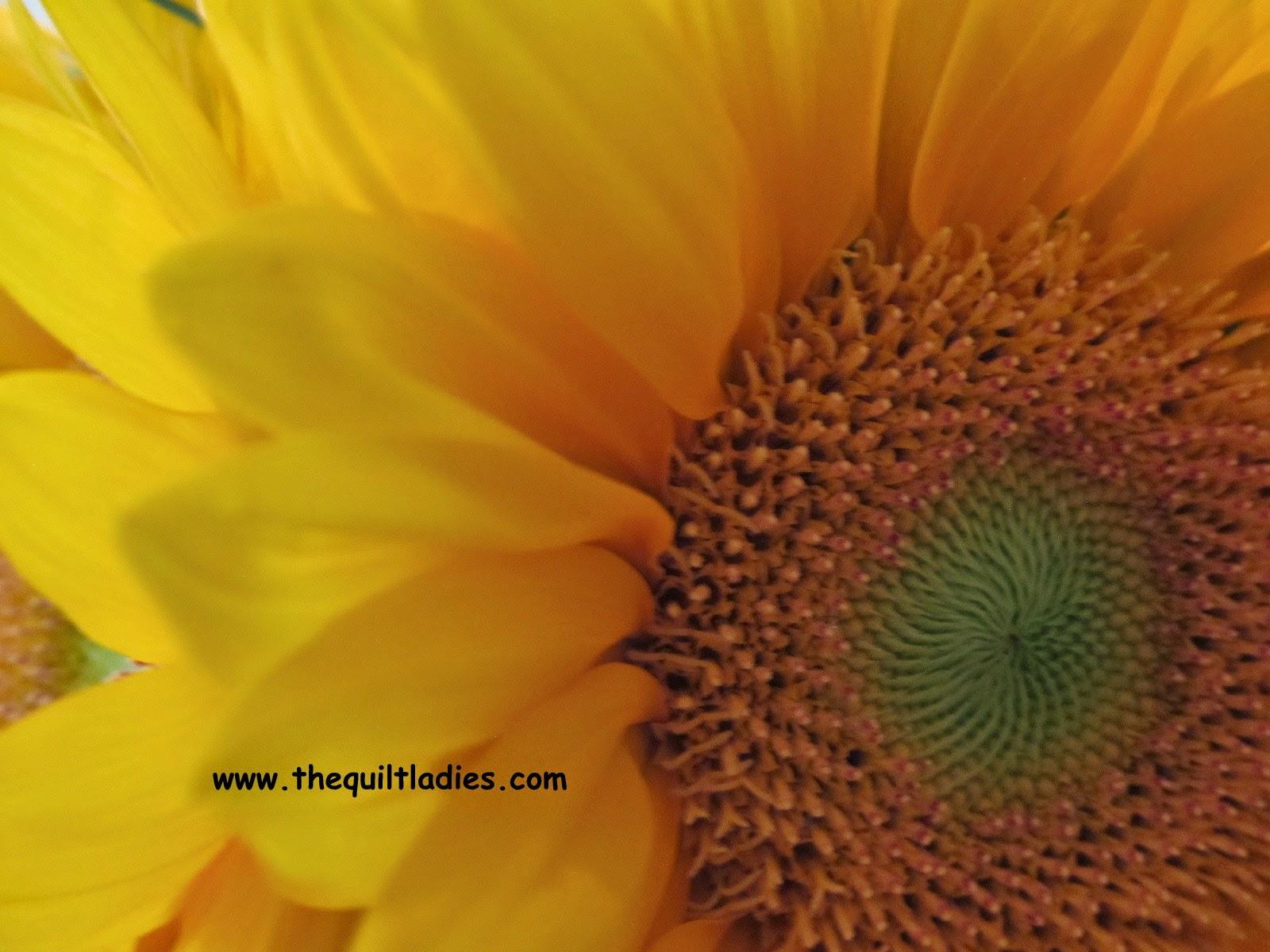 Sun Flower Center Beth Ann Strub (c) All Rights Reserved