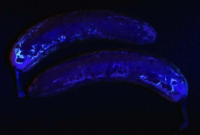 banana fluorescence