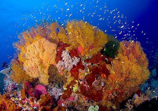 Philippines National Marine Park