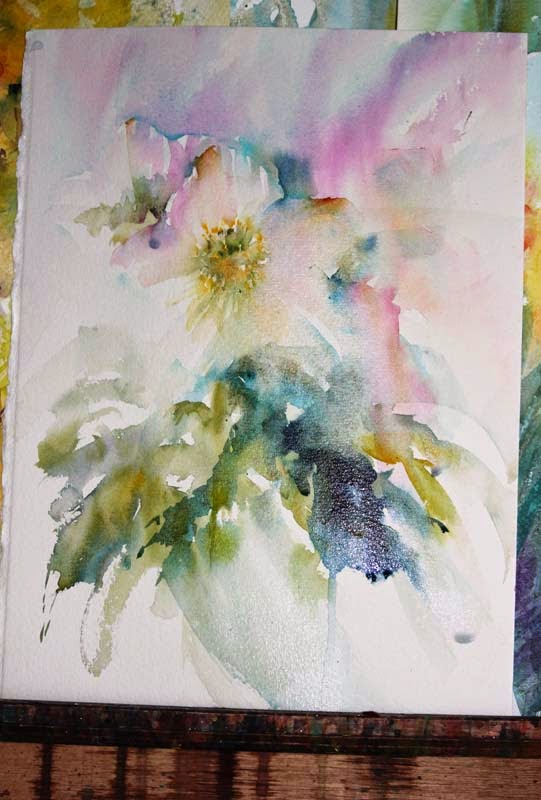 Watercolours with life christmas roses in watercolour - What temperature is too cold to paint outside ...