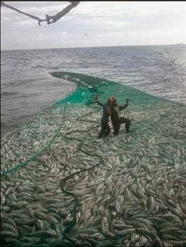 Fenomena pulau ikan