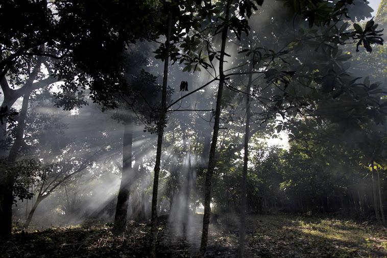 Suasana Pagi Di Hutan Pantai Nipah