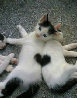 Cute kitten picture - heart