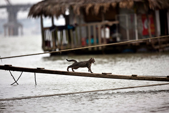 Hanoi Vietnam cat