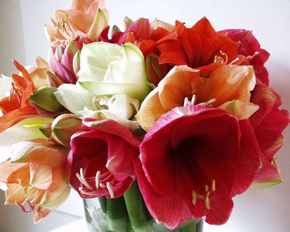 Pin bouquet fleurs amaryllis artificiel 600x600 31kb on for Fleurs amaryllis bouquet