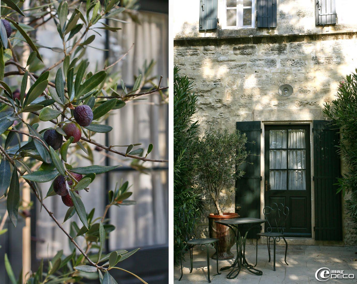 L'olivier symbole de la Provence