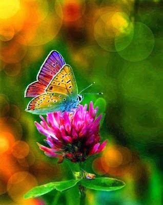 http://strokeofgrace.blogspot.com/p/blog-page_9.html