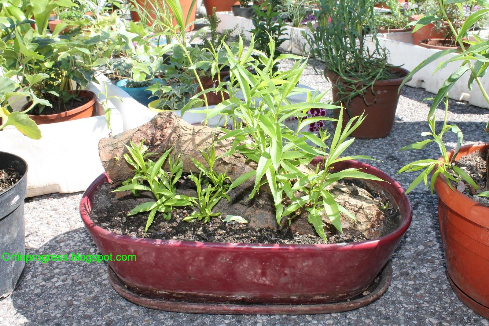 Orti in progress quattro chiacchiere con un giardiniere for Tipi di bonsai