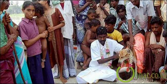 Lelaki India menikahi anjing