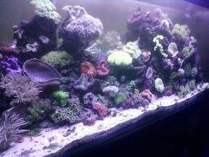 Aquarium Saya Gan.......