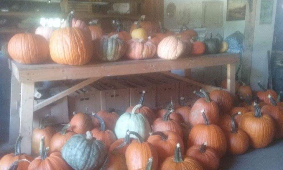 Pumpkin season again