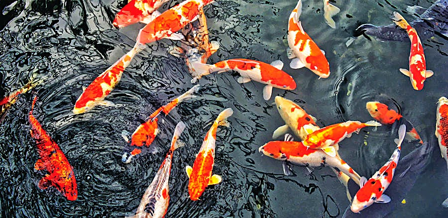 Travels with jimbabs lekki conservation centre place for Koi carp centre