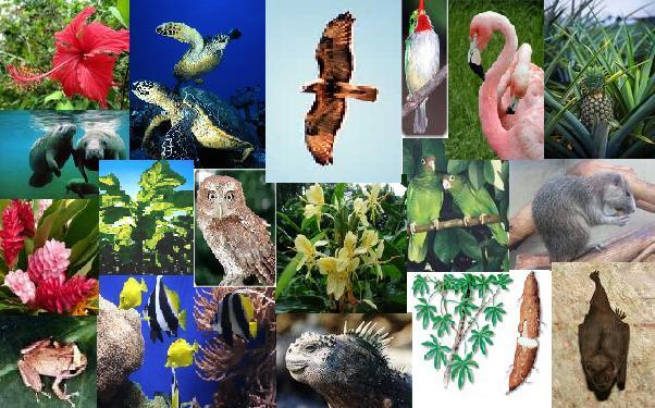 Kepupusan flora dan fauna serta pembalakan