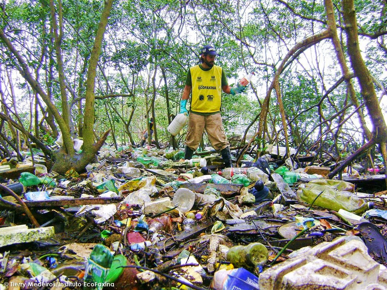 Voluntário coleta plástico em manguezal no estuário de Santos. Ecossistema considerado berçário de espécies marinhas  sofre diariamente com o desmatamento e a poluição na região. Foto: Tierry Medeiros/Instituto EcoFaxina