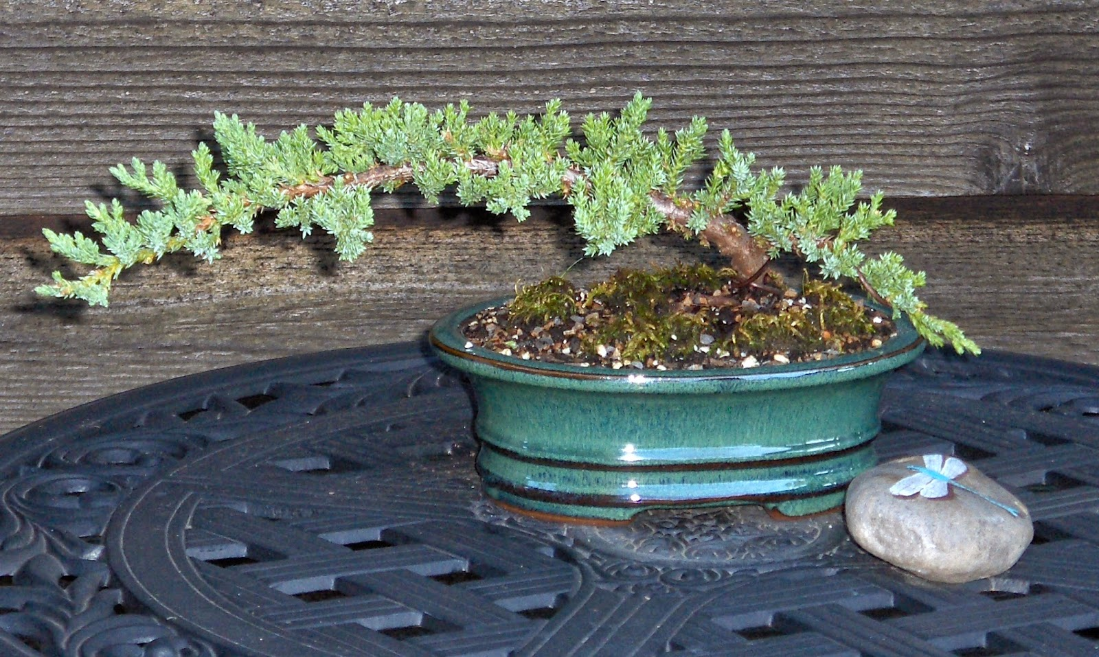 Gardening In The Heart Of Virginia Bonsai What It Is And How To