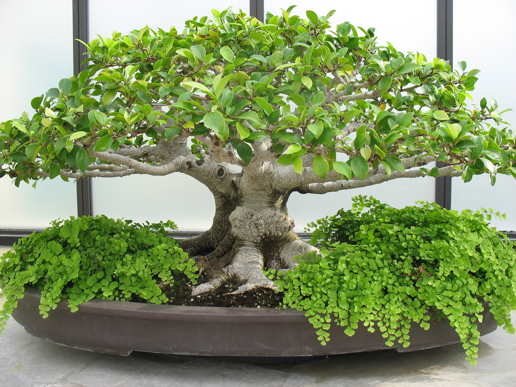 Bonsai Tree TESTING