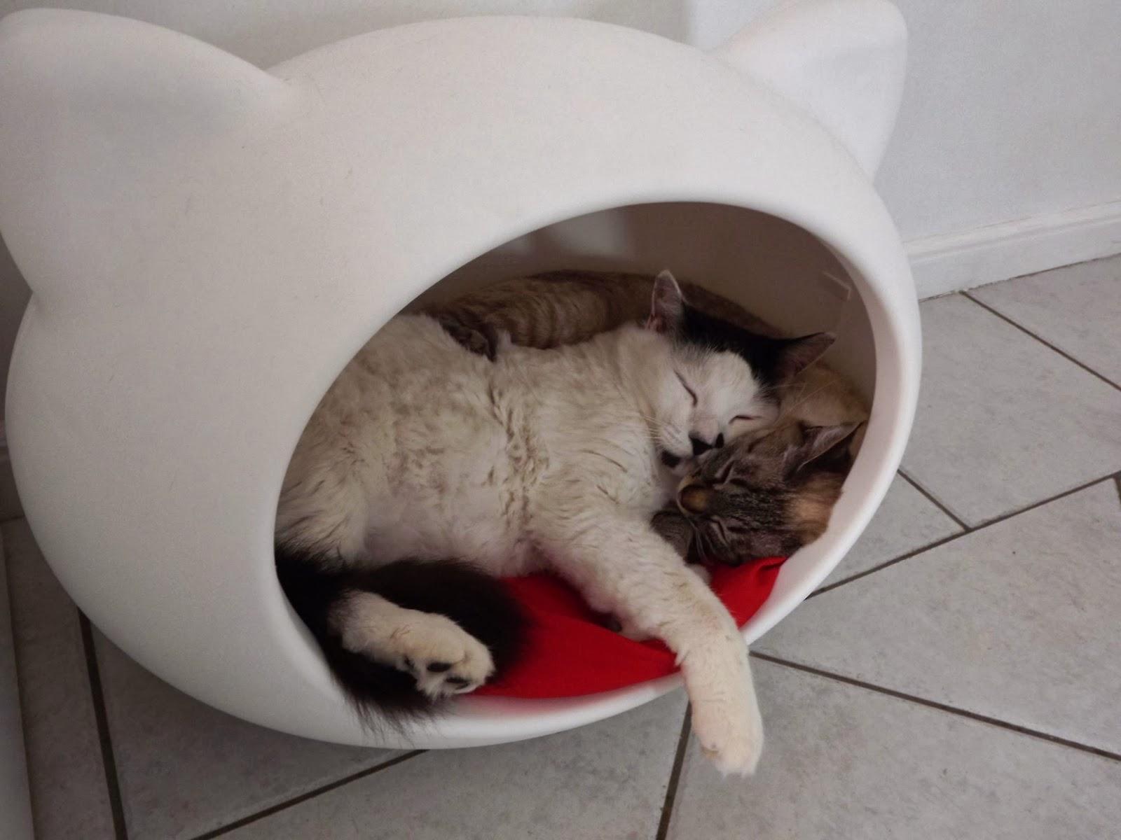 It 39 s a pet 39 s life for Designer cat beds uk