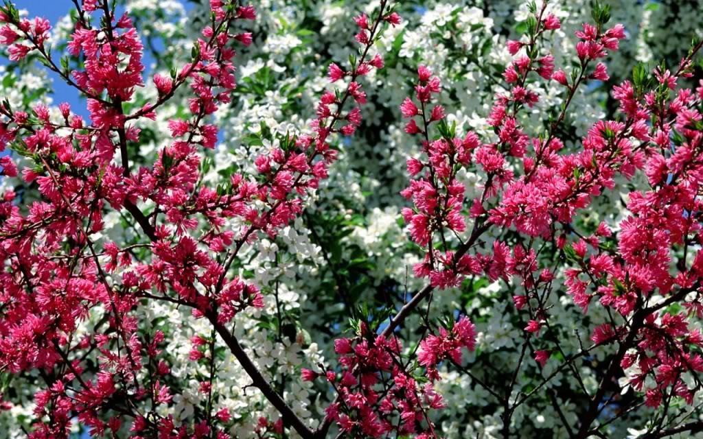 Imagini Frumoase din Natura Poze frumoase si peisaje