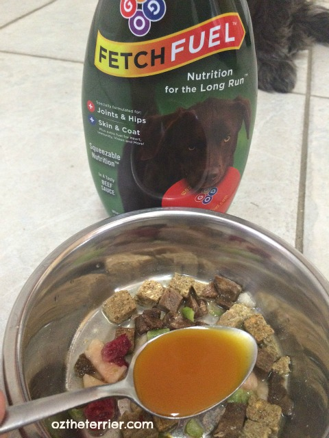 FetchFuel supplement for dogs comes in tasty beef sauce flavor