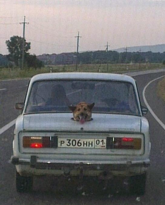 Bricolage du coffre de la voiture pour le chien