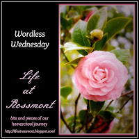 http://lifeatrossmont.blogspot.com/2015/10/wordless-wednesday-october-28-with-link.html