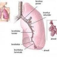 obat untuk penyakit radang paru paru secara herbal