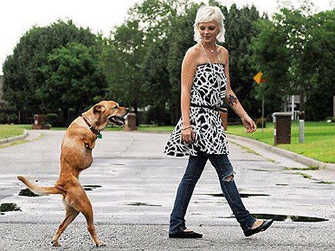 Theres something peculiar but also very endearing about dogs that can walk upright
